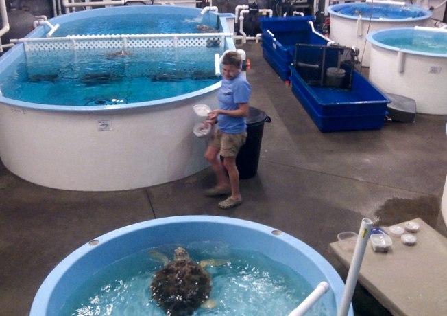 Turtle_pools
