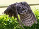 Great Horned Owls Have a Habit of Stealing Eagle Nest 'Penthouses'