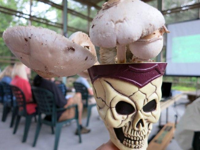 Skull_cup_mushroom_cropped